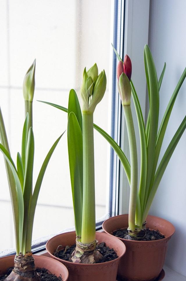 Büropflanzen im Fenster.