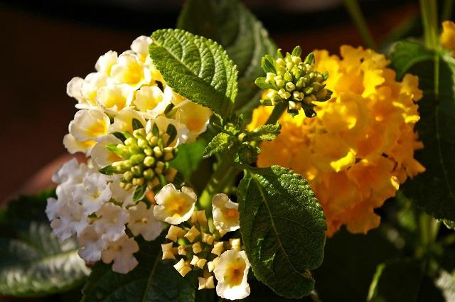 Nahaufnahme von bunten Büropflanzen. Bestellen sie jetzt schöne Büroblumen.