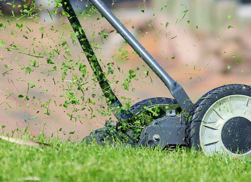 Grünanlagenpflege Potsdam: Rundumbetreuung mit Heckenpflanzungen, Vertikurieren, Baumfällarbeiten und vielem mehr!
