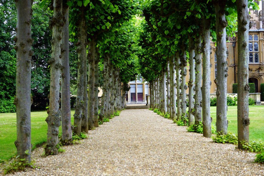 Unsere Gebäudereinigung Jena übernimmt auch gern die Grünanlagenpflege