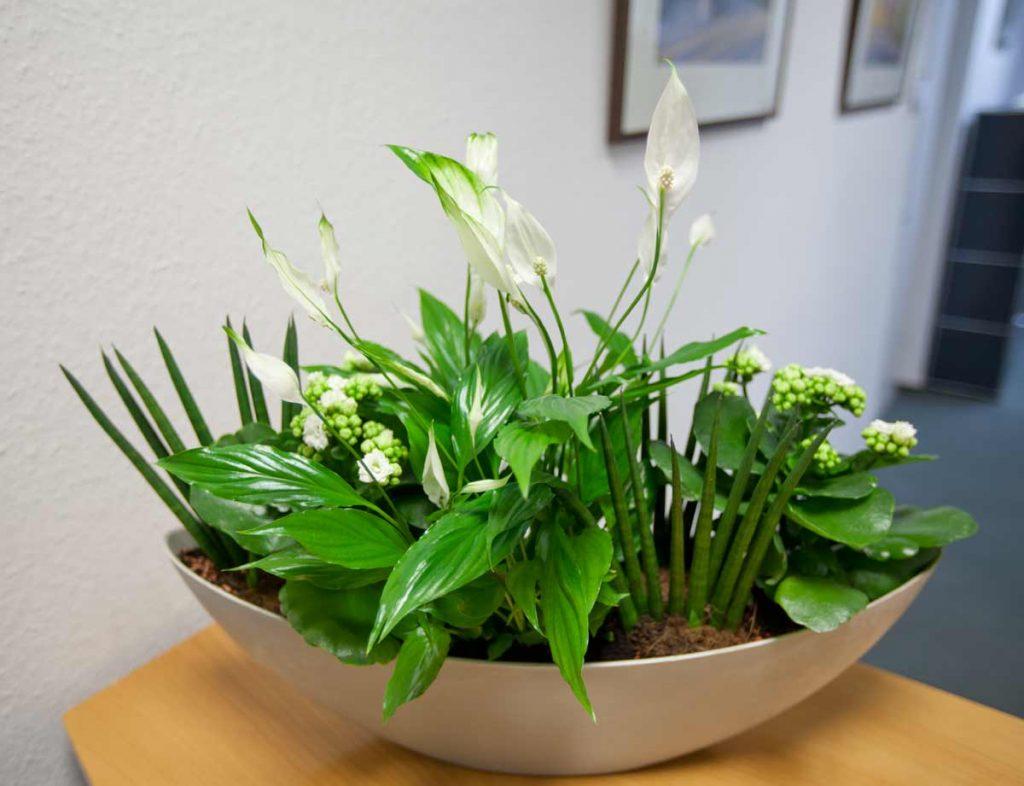 Büro-Floristik - klasisch-moderne Pflanzschalen