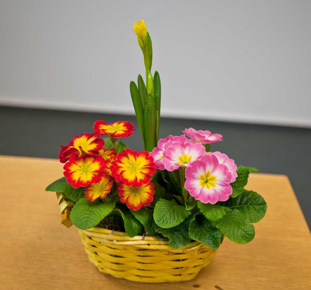 Büro-Floristik - bunte Frühjahrskörbe